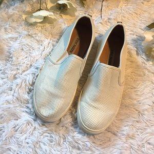 Steve Madden Eddina Sneakers